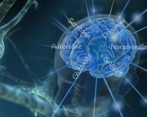 prod_neurotransmitters-300x240